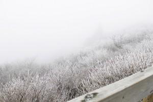 剣山 霧氷 2 - コピー