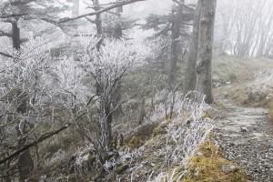 剣山 霧氷 4 - コピー
